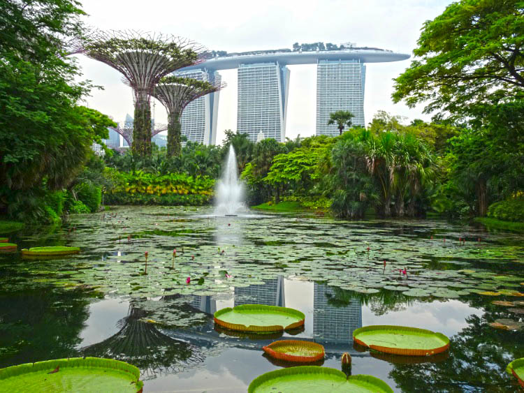 Gardens by the bay Water Lily Pond