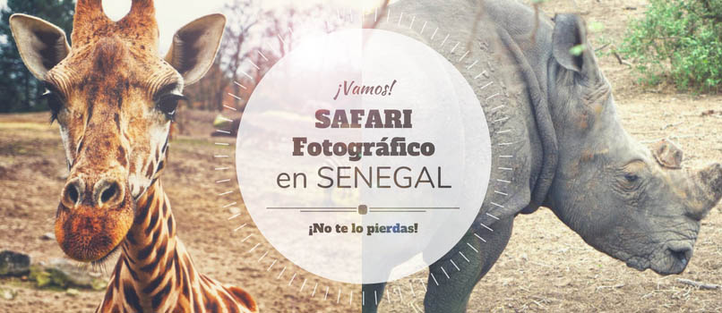 safari a senegal
